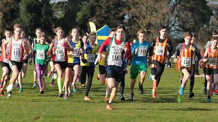 The start of the Under 15 race at the Norfolk Cross Country Championships. Picture: Tony Payne
