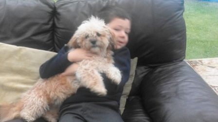 Danny Stapleton, 8, with his beloved dog, Pippa, who needs life saving heart surgery. Picture: Ally
