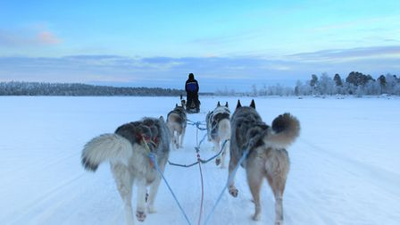 Husky sleigh ride on a frozen lake in Lapland. Picture: THINKSTOCK
