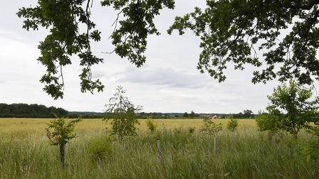 The fields around Honingham Thorpe could be home to a new village.Picture: Nick Butcher