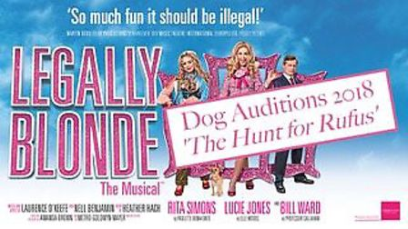 The search is on for a canine star to join the cast of Legally Blonde The Musical in Norwich. Photo: