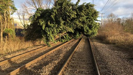 The tree blocking the line between Ipswich and Norwich. Photo: Greater Anglia