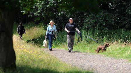 Dog owners enjoy the Suffolk Wildlife Trust's Knettishall Heath. Picture: Simon Parker