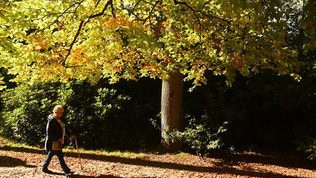 A beautiful autumn morning at Fairhaven woodland and water gardens. Picture: James Bass