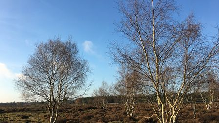 Brandon Country Park in the Winter sunshine. Picture: Rebecca Murphy