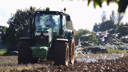Seagulls follow a tractor ploughing in the autumn sunshine near Brampton. Picture: DENISE BRADLEY