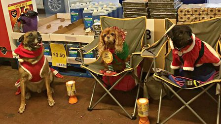Some happy dog helpers. Picture: The Barking Bugle