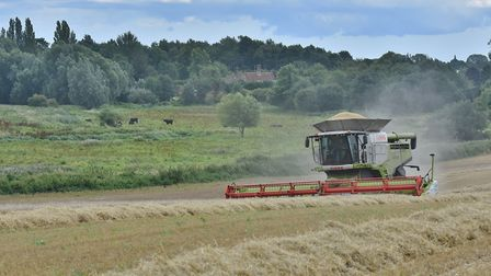 Combine harvesting beside the old Colney Hall over looking Bowthorpe Marsh. Picture: Dominic Gwillia
