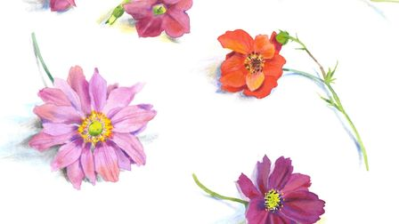 Flowers - July 2. Picture: MARY WOODIN