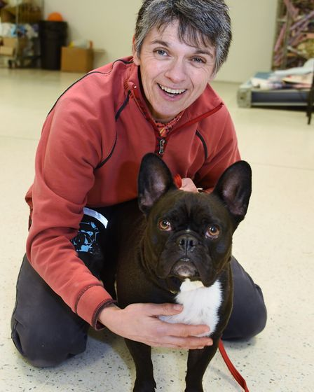 Monty the French bulldog crossed with pug taking part in the doggy auditions for Legally Blonde at t