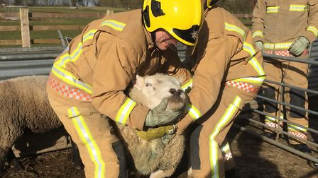 Norfolk Fire and Rescue Service trainee firefighters taking part in an animal handling course at Eas