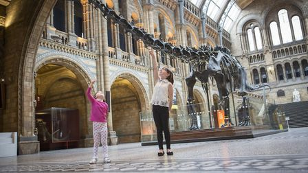 Dippy the dinosaur is visiting Norwich Cathedral in 2020. Pictured: The Diplodocus exhibit with chil