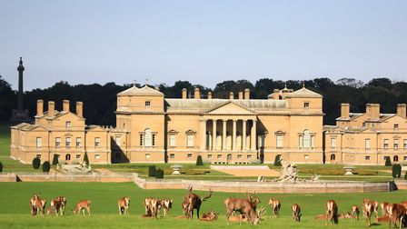 Red Deer grazing in the park with the magnificent backdrop of Holkham Hall. Picture: Richard Brunton