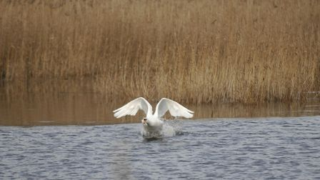 RSPB Lakenheath Fen offers lots to see. Picture: Sonya Duncan