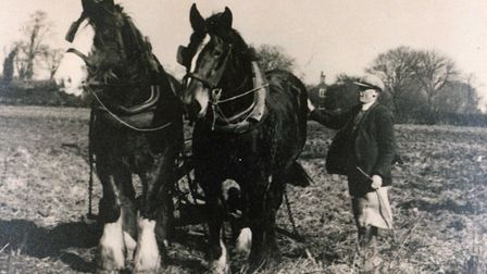 Back in the day... Duke Sayer of Hingham with his hard-working pair, Peggy and Bewty.