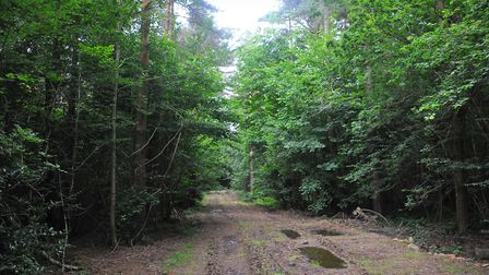 Thorpe woods, off Plumstead Road East. PHOTO BY SIMON FINLAY