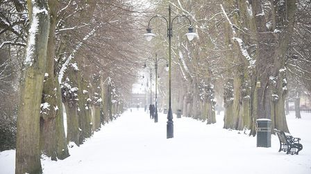 A carpet of snow lines the avenue of trees in The Walks, King's Lynn. Picture: Ian Burt