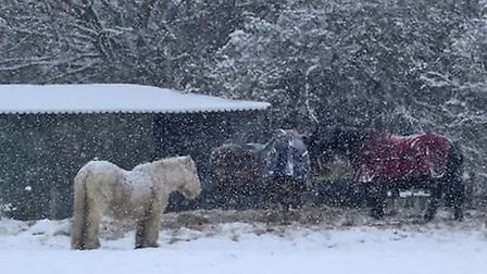 Horses in the snow at Hillside Animal Sanctuary. Picture: Hillside Animal Sanctuary