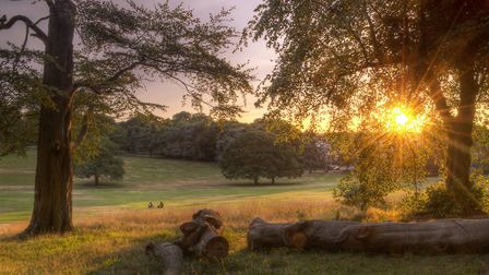 International Garden Photographer of the Year competition winner The Last Rays of Sun, by Simon Lea.
