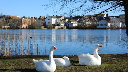 Diss Mere. Photograph by Sonya Duncan.