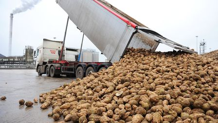 Sugar beet is unloaded at the British Sugar factory in Cantley. Picture: James Bass