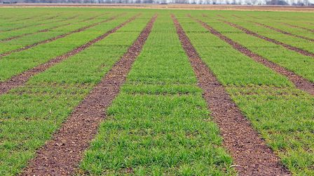 Agrovista is establishing a major new trials site at the Coldham Estate, near Wisbech Fens. Picture: