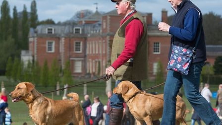 The East Anglian Game and Country Fair taking place at the Euston Estate near Thetford. Photo : Stev