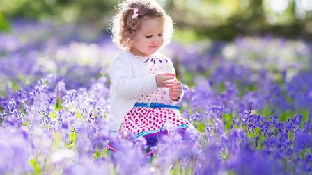 Playing in the sun in a field of bluebells. Photo: Fam Veld/PA