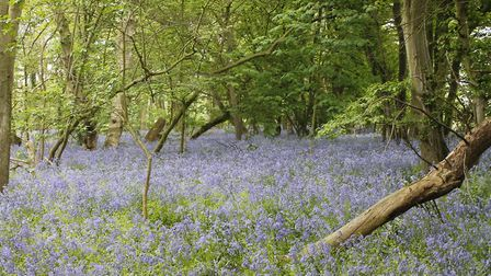 Picture provided by Norfolk Bluebell Wood Burial Park.