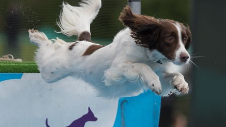 The East Anglian Game and Country Fair at the Euston Estate near Thetford. Dogs making a splash on t