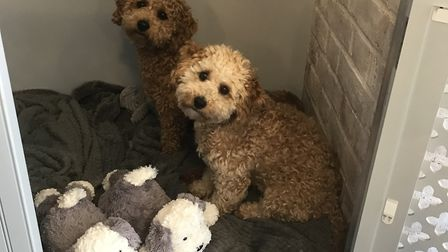 Henry and Bertie in their own area at Stone Hairdressing in Norwich. Photo: Lauren Barratt