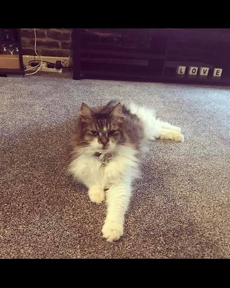 Madison has gone missing from the Norwich area