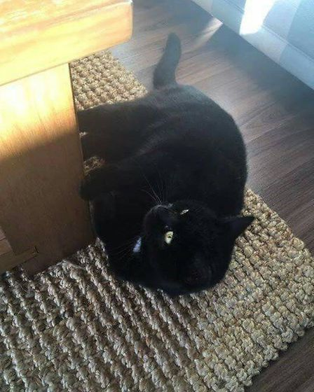 Spud has gone missing from the Norwich area