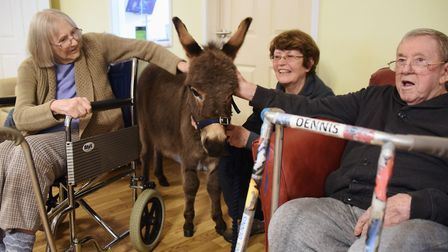 Miniature donkey one-year-old Rubik, with handler Pip Cullingford, visits the residents at Two Acres