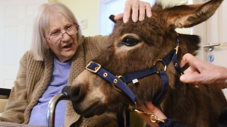 Miniature donkey one-year-old Rubik visits the residents at Two Acres Nursing Care Home at Taverham,