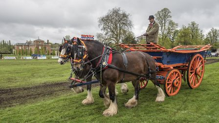 The 2018 East Anglian Game and Country Fair taking place on the Euston Estate. Heavy horse display i