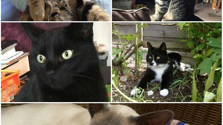 Have you seen these missing cats around the Norwich area?