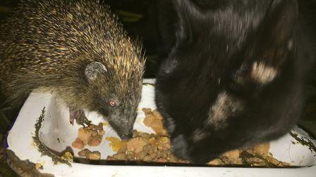 Mr Hedgehog and Sooty enjoying a spot of fine dining