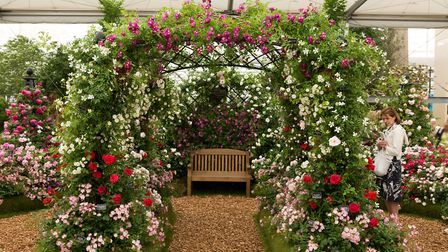 The award winning stand by Peter Beales Roses at the Chelsea Flower Show 2018. PHOTO: Keith Mindham.