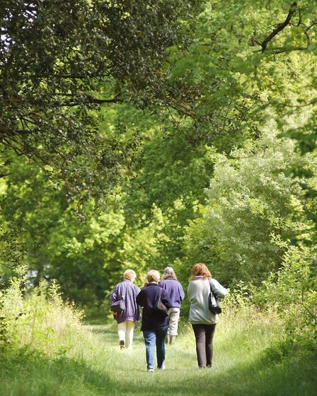 Foxley Wood, which is hosting a mini-beast hunt on May 30Photo: GRAHAM CORNEY