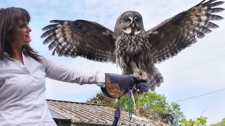 Tonya Knights with Olaf, the three-year-old great grey owl, which she uses to educate children about