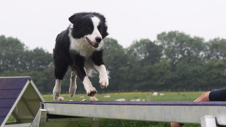The dog agility course with collie Bass on the dog walk at the new business hub for all things canin