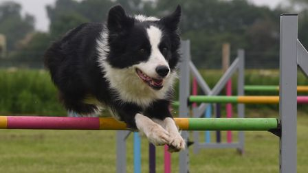 The dog agility course with collie Bass sailing over a jump at the new business hub for all things c