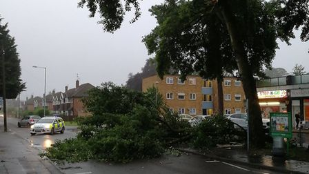 Police were called out to the scene of a fallen tree in Catton Grove Road in Norwich.Photo: @Norwich