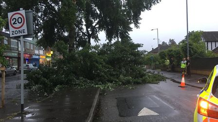 Police were called out to the scene of a fallen tree in Catton Grove Road in Norwich.Photo: Chris Go