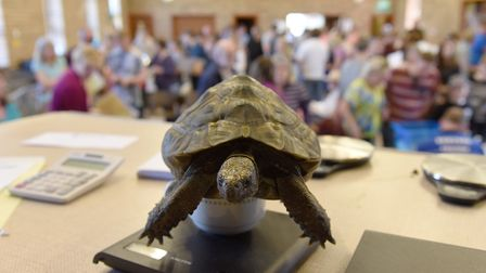 A tortoise getting a health check and being weighed at a previous Tortoise Open Day in Hethersett. P