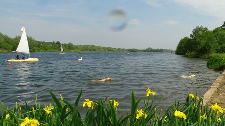 Daffodils overlooking large broad at Whitlingham Country Park, Norwich. Picture: CHRISTOPHER KEELEY