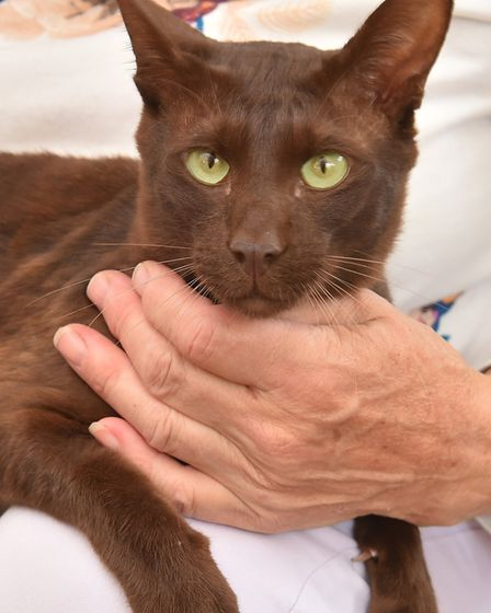 Ria Oldroyds cat Oscar was brutally beaten - the total vet bill from her local vet and specialist ve