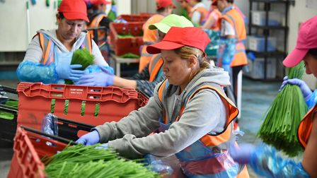 EU migration is particularly important for sectors like agriculture. Picture: Sonya Duncan