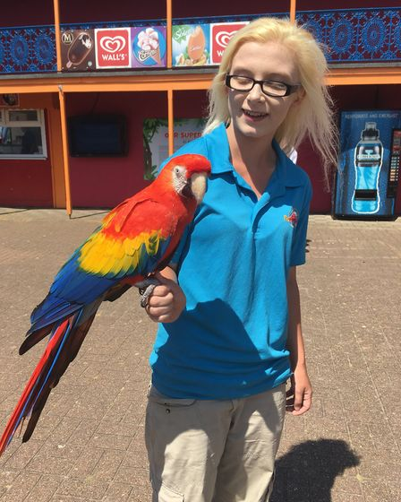 We met this colourful parrot at Pleasurewood Hills, but ran out of time to see the Parrot Show. Pict